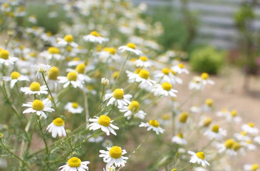 クレアガーデンは香川県 高松市 太田上町にある外構・エクステリア・ガーデンの専門店です