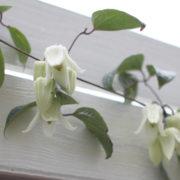クレマチス アンスンエンシスの花